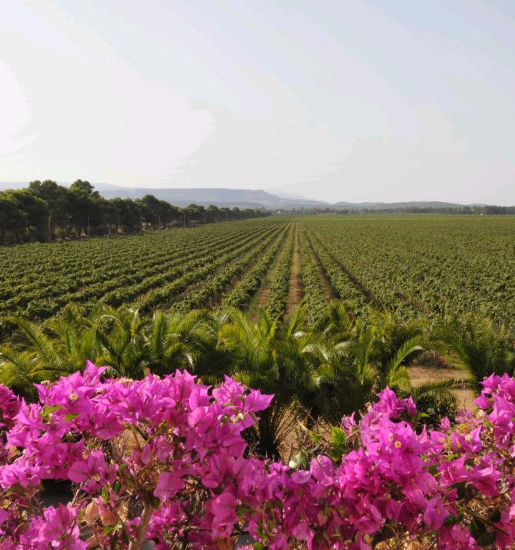 Wijngaarden In Alghero Met Gavino: Tenute Sella & Mosca